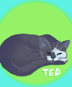 Cat Portrait by egriz