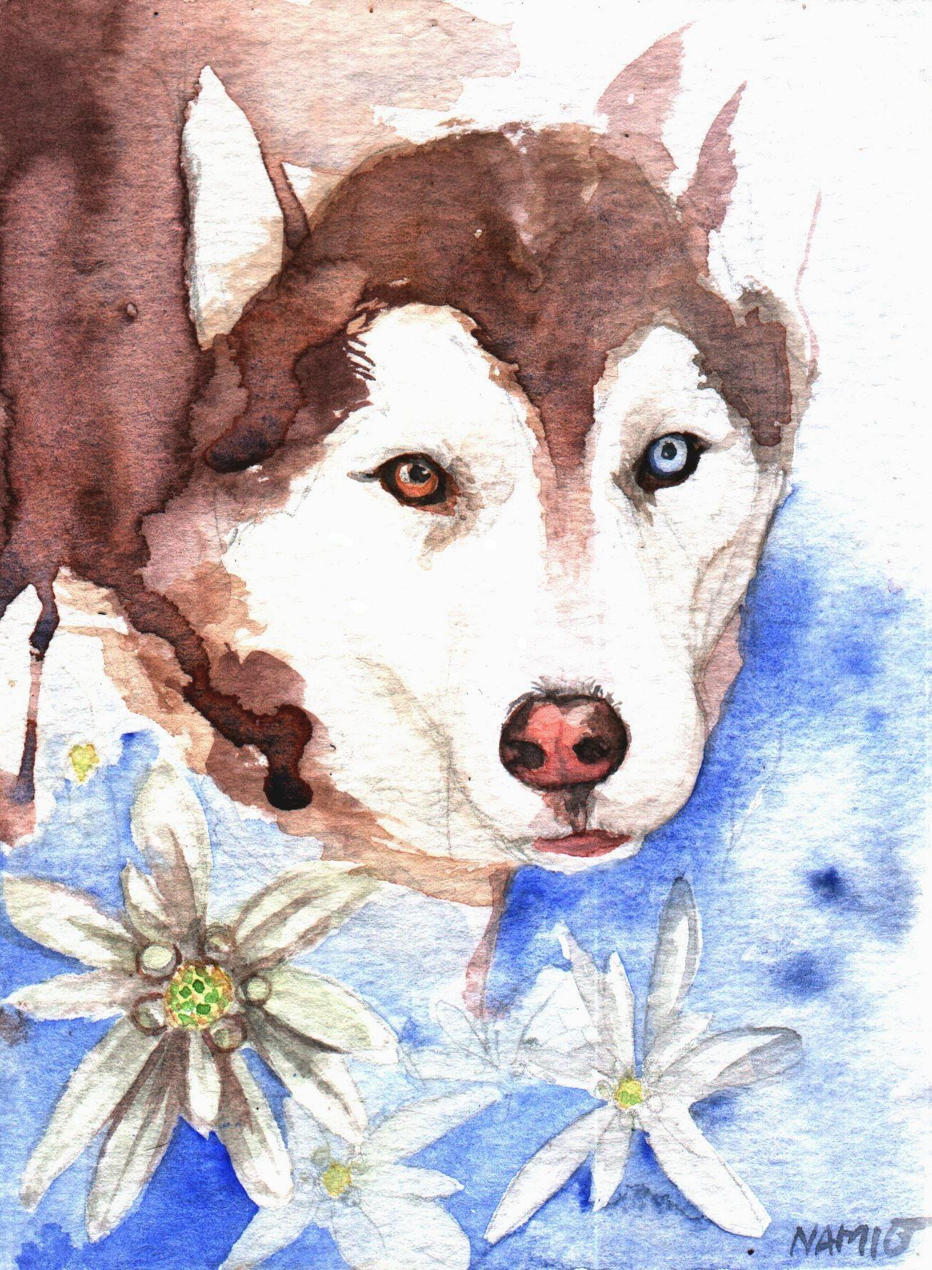 Siberian Husky by Namio