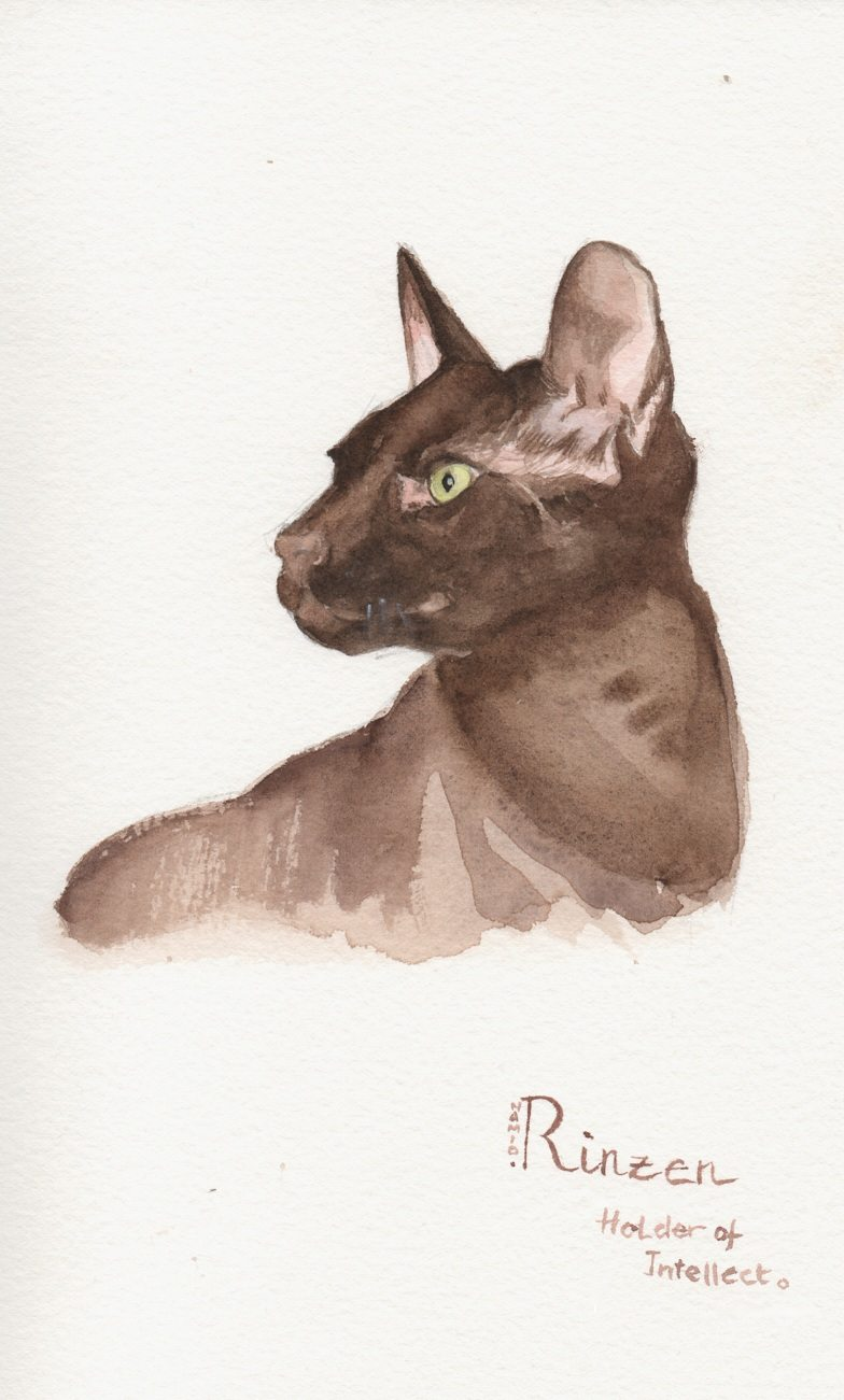 Cat Portrait by Namio