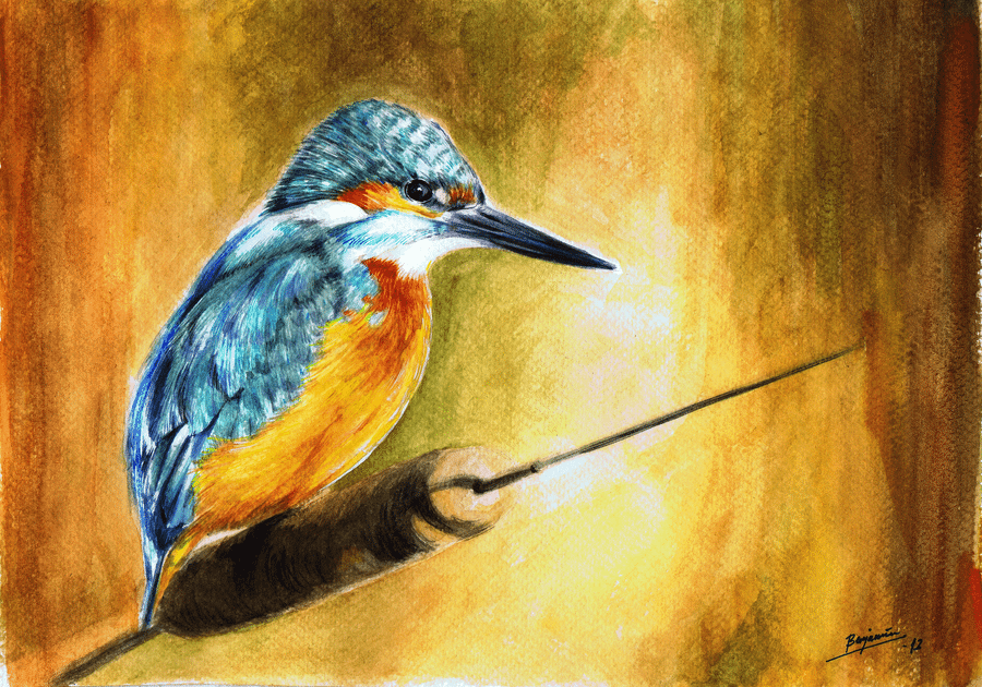 Kingfisher by BenDX
