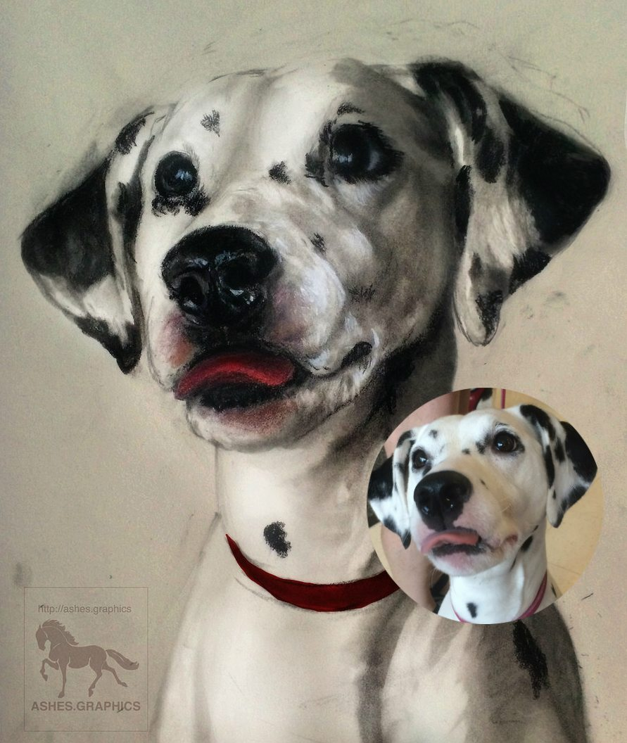 Dog Graphite Portrait by Ashes Graphics