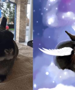ArtCorgi - Pet Portraits by Danji commission sample featuring a rabbit